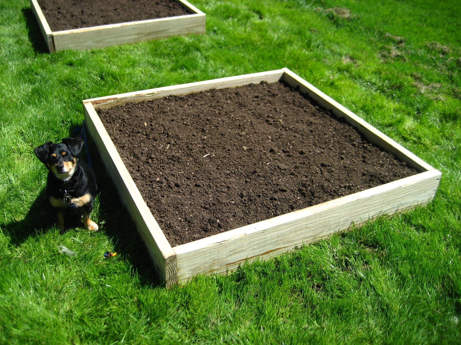 Raised bed soil mix buy turf essex and turf suffolk for Garden topsoil