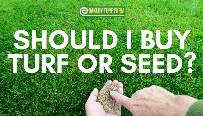 Should I buy turf or seed?