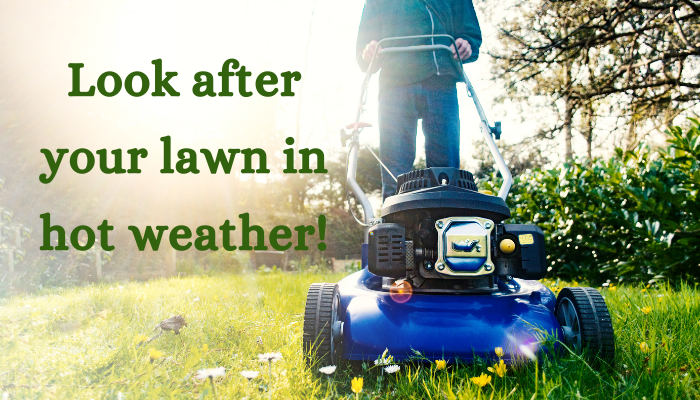 How to care for your lawn in hot weather