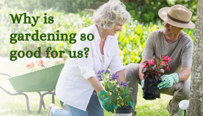 What are the benefits of gardening? Why is it so good for us?