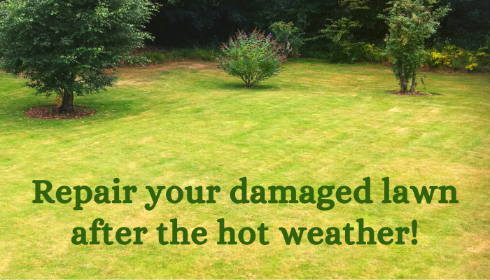 Repair lawn after hot weather